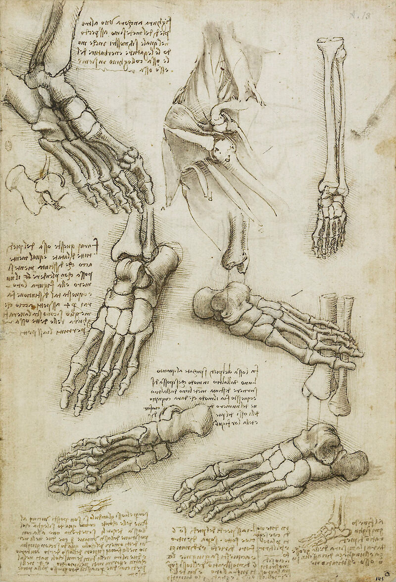 The bones of the foot, and the shoulder
