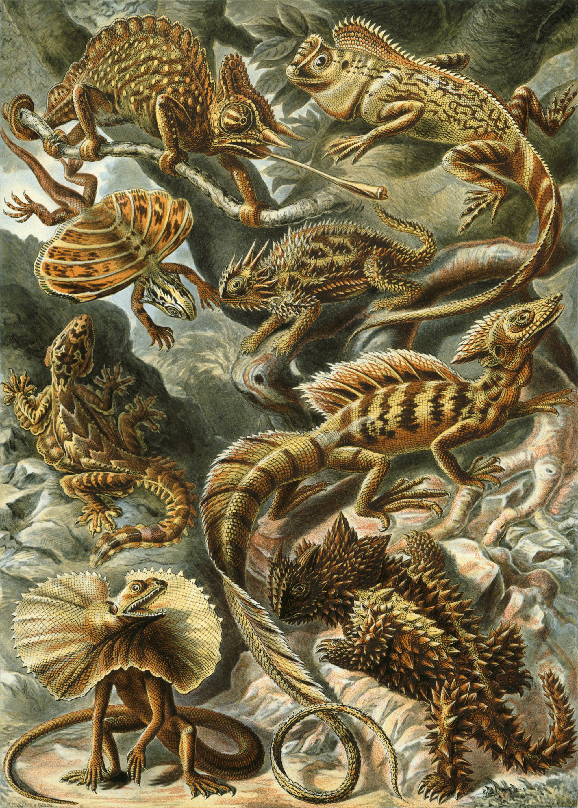 Art Forms in Nature, Plate 79: Lacertilia, 1904 — Ernst Haeckel,