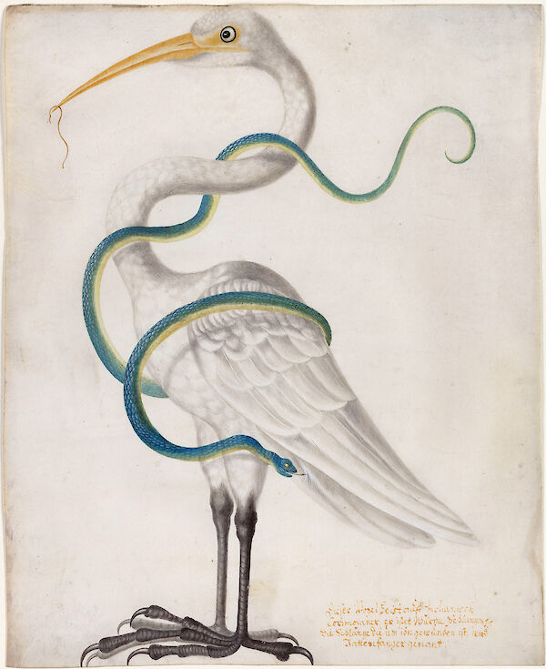 Heron Encircled by a Snake