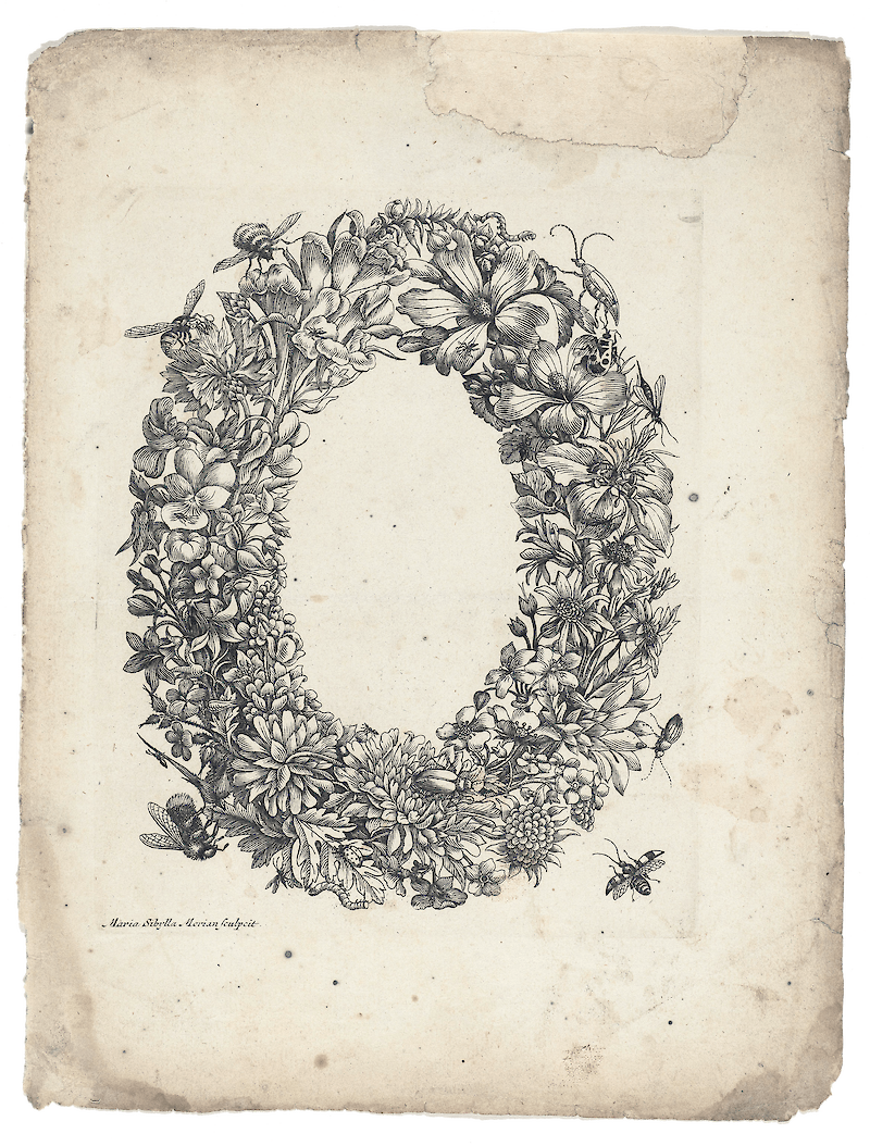 Floral Wreath with Insects