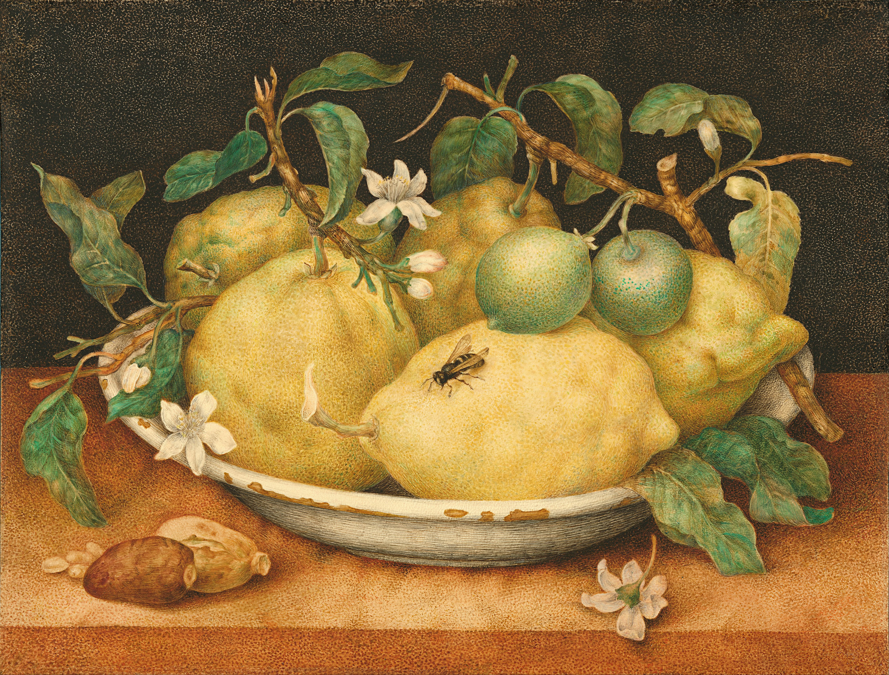 Still Life with Bowl of Citrons, 1640 — Giovanna Garzoni