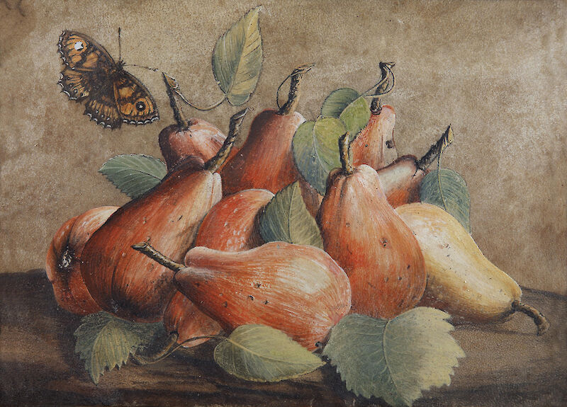 Still Life with Pears and a Butterfly